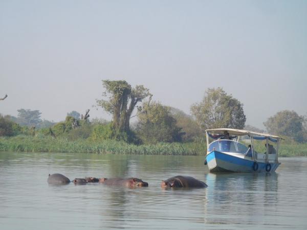 Famille hippopotames au lac