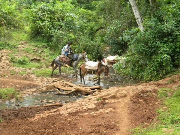 Vers Muti avec les mulets